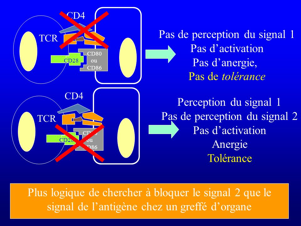 Pas de perception du signal 1 Pas d'activation Pas d'anergie,