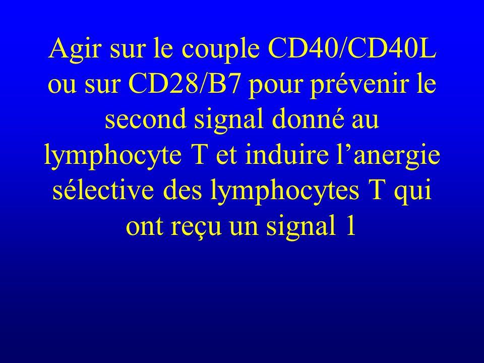 Agir sur le couple CD40/CD40L ou sur CD28/B7 pour prévenir le second signal donné au lymphocyte T et induire l'anergie sélective des lymphocytes T qui ont reçu un signal 1