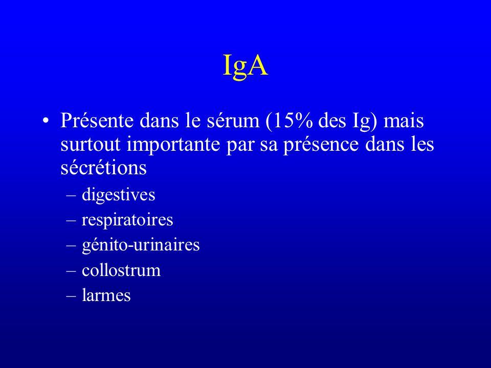 IgA Présente dans le sérum (15% des Ig) mais surtout importante par sa présence dans les sécrétions.