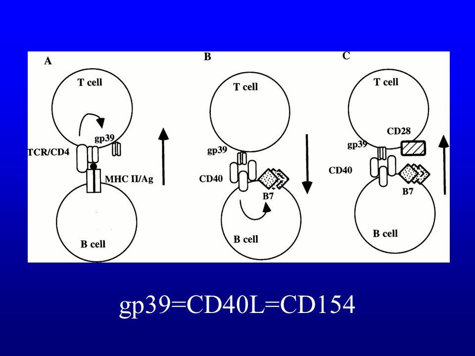 gp39=CD40L=CD154