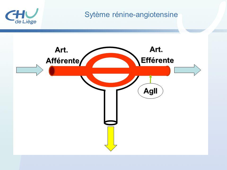 Sytème rénine-angiotensine