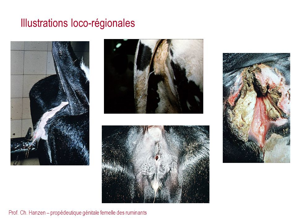 Illustrations loco-régionales