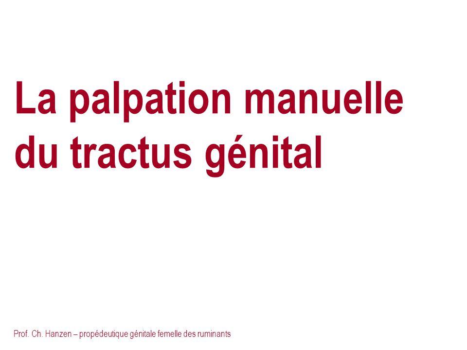 La palpation manuelle du tractus génital