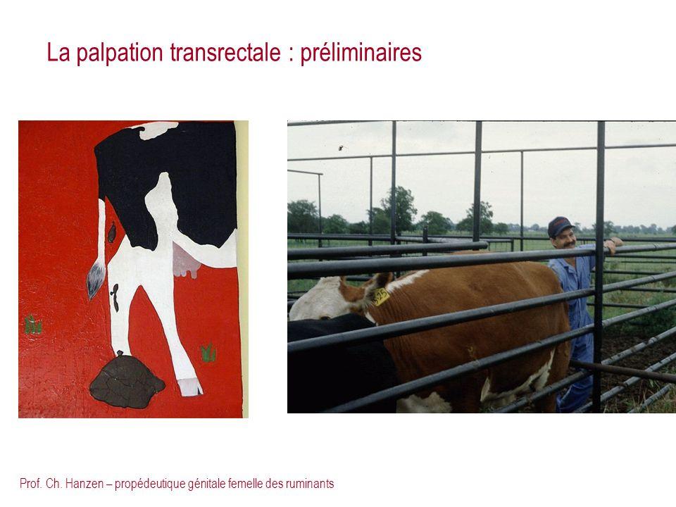 La palpation transrectale : préliminaires