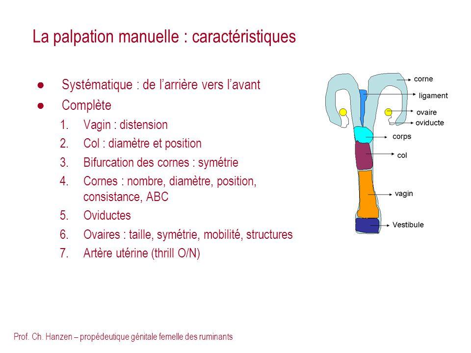 La palpation manuelle : caractéristiques