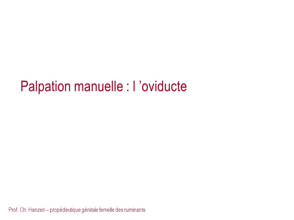 Palpation manuelle : l 'oviducte
