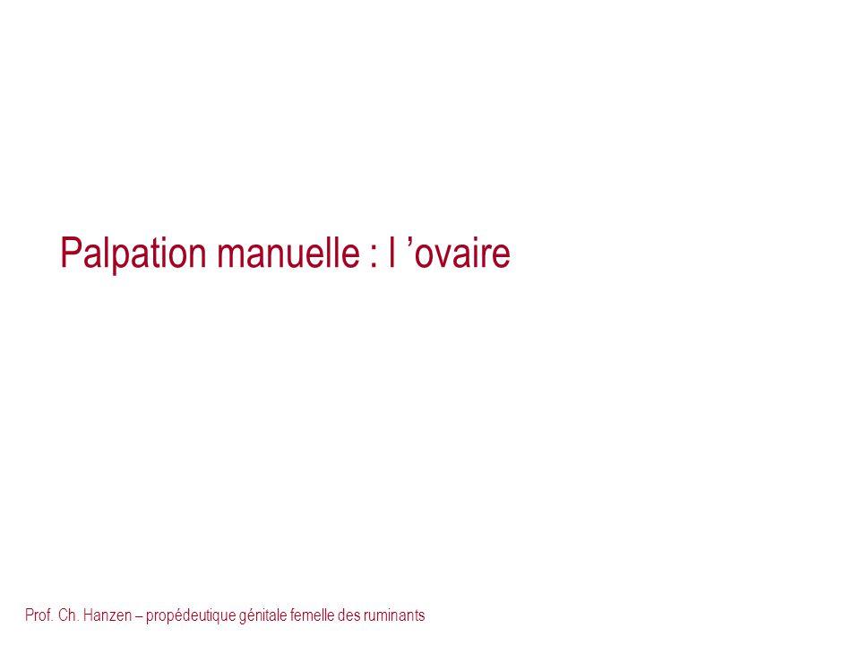 Palpation manuelle : l 'ovaire