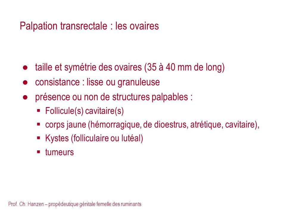Palpation transrectale : les ovaires