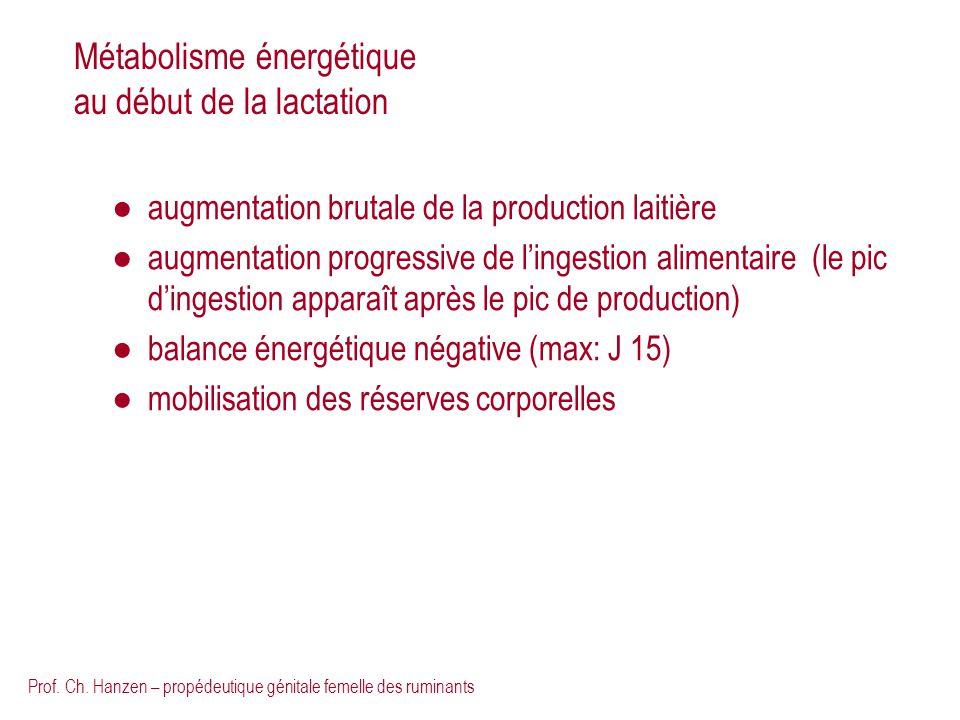 Métabolisme énergétique au début de la lactation