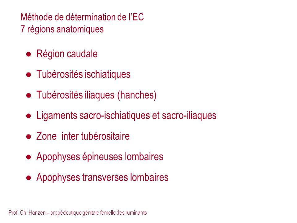 Méthode de détermination de l'EC 7 régions anatomiques