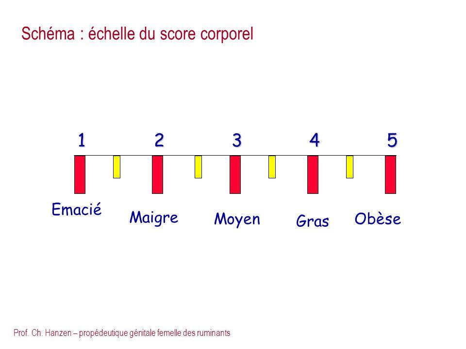 Schéma : échelle du score corporel