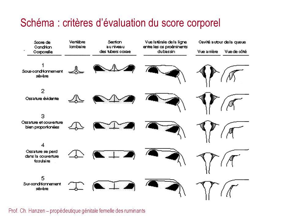 Schéma : critères d'évaluation du score corporel