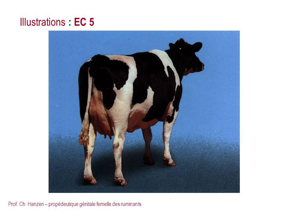 Illustrations : EC 5 Prof. Ch. Hanzen – propédeutique génitale femelle des ruminants