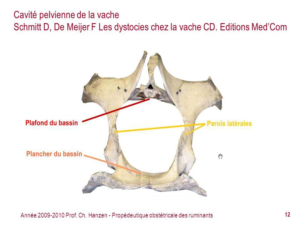 Cavité pelvienne de la vache Schmitt D, De Meijer F Les dystocies chez la vache CD. Editions Med'Com