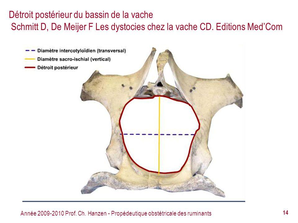 Détroit postérieur du bassin de la vache Schmitt D, De Meijer F Les dystocies chez la vache CD. Editions Med'Com