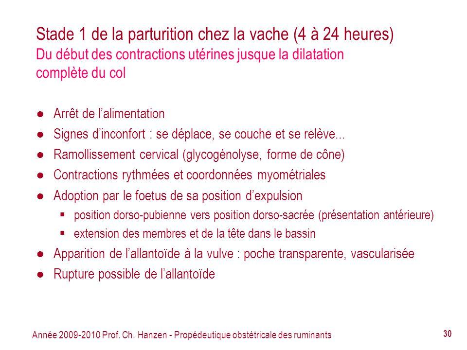 Stade 1 de la parturition chez la vache (4 à 24 heures) Du début des contractions utérines jusque la dilatation complète du col