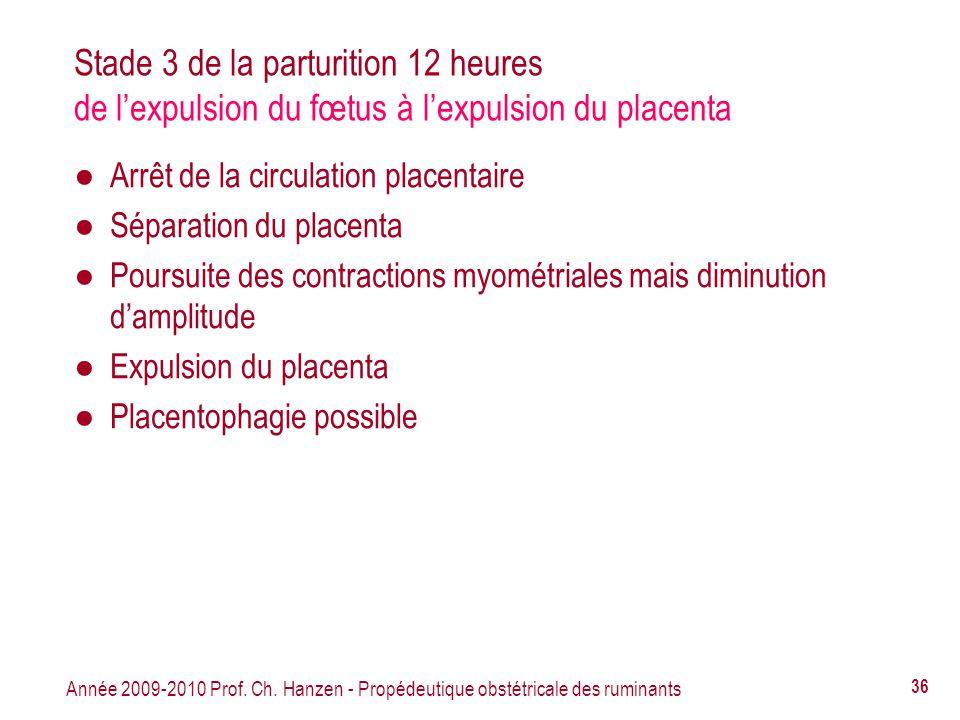 Stade 3 de la parturition 12 heures de l'expulsion du fœtus à l'expulsion du placenta