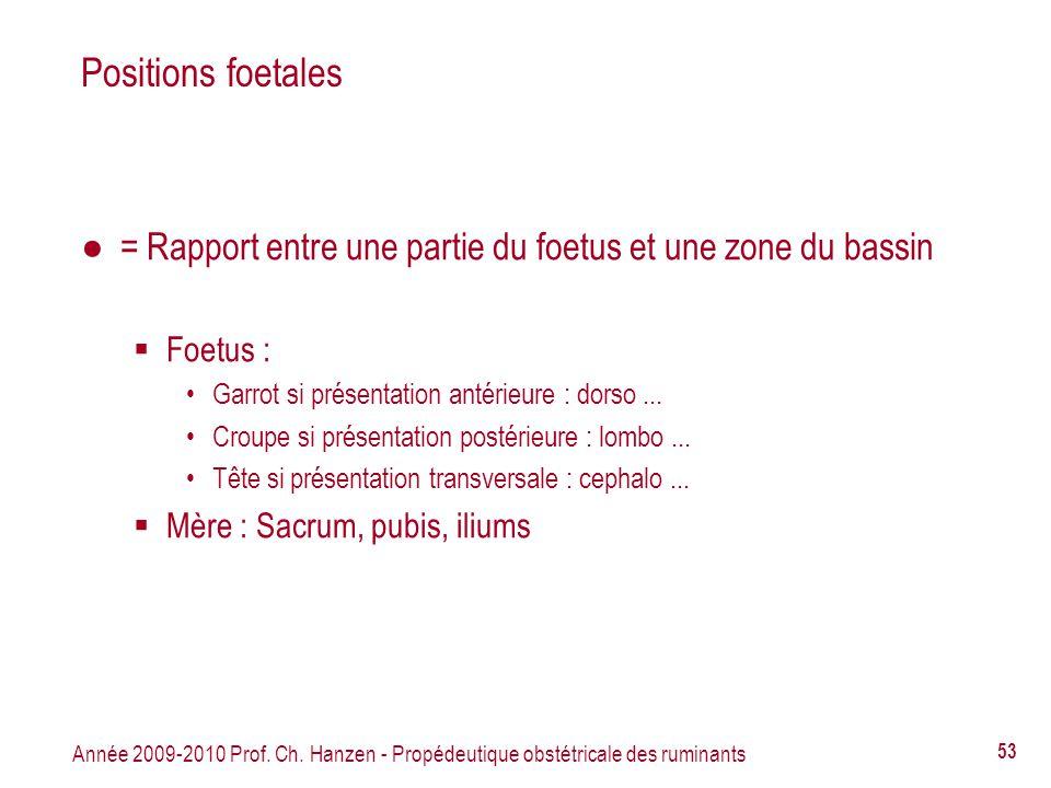 Positions foetales = Rapport entre une partie du foetus et une zone du bassin. Foetus : Garrot si présentation antérieure : dorso ...