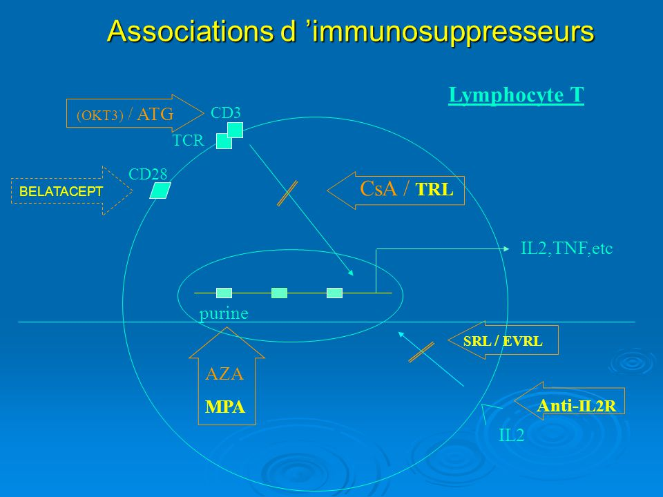 Associations d 'immunosuppresseurs