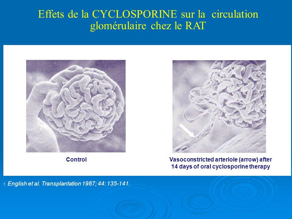 Effets de la CYCLOSPORINE sur la circulation glomérulaire chez le RAT