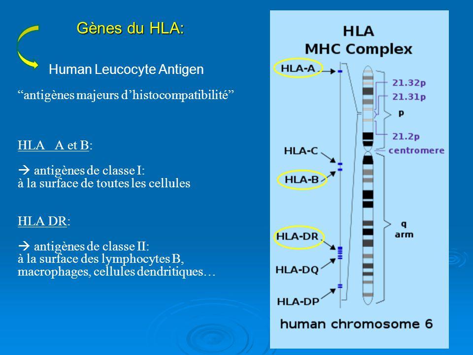 Human Leucocyte Antigen