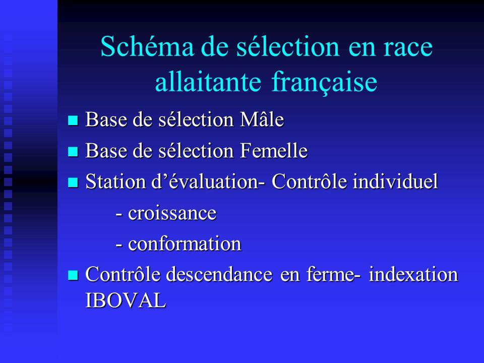 Schéma de sélection en race allaitante française