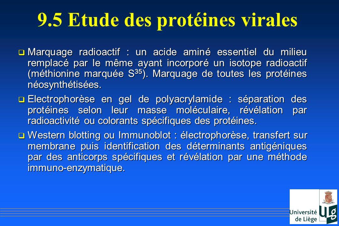9.5 Etude des protéines virales