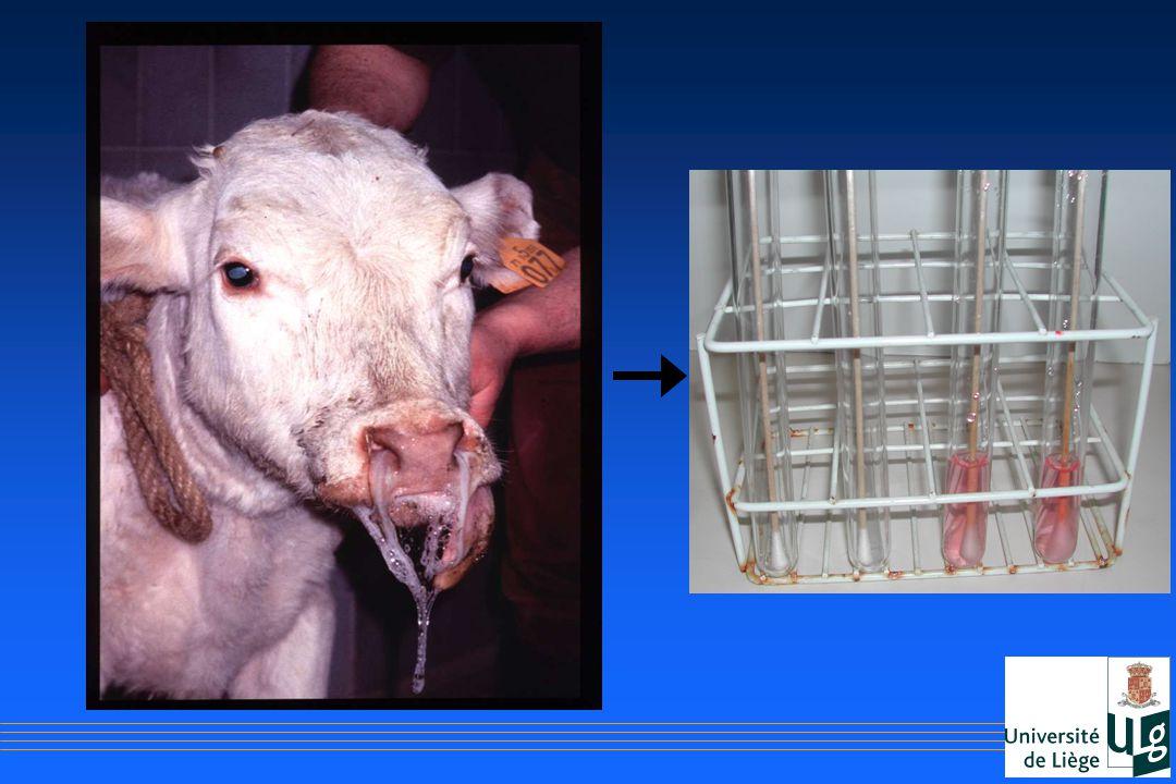 Exemple : veau présentant un jetage nasal muqueux abondant bilatéral, une conjonctivite, il est en hyperthermie et abattu.