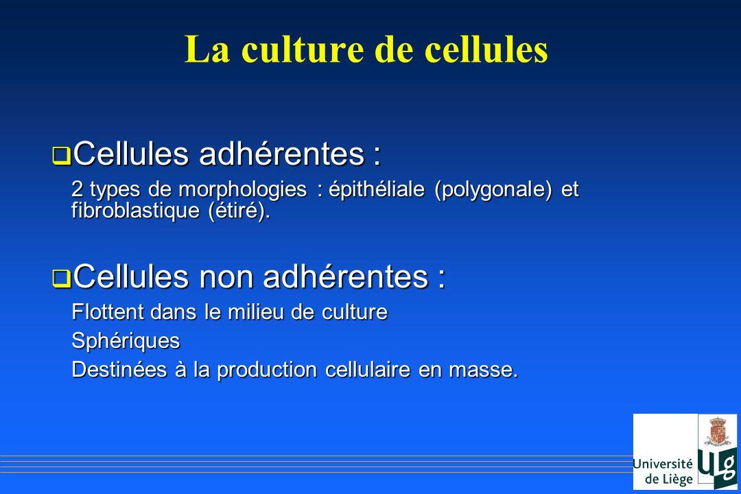 La culture de cellules Cellules adhérentes : Cellules non adhérentes :