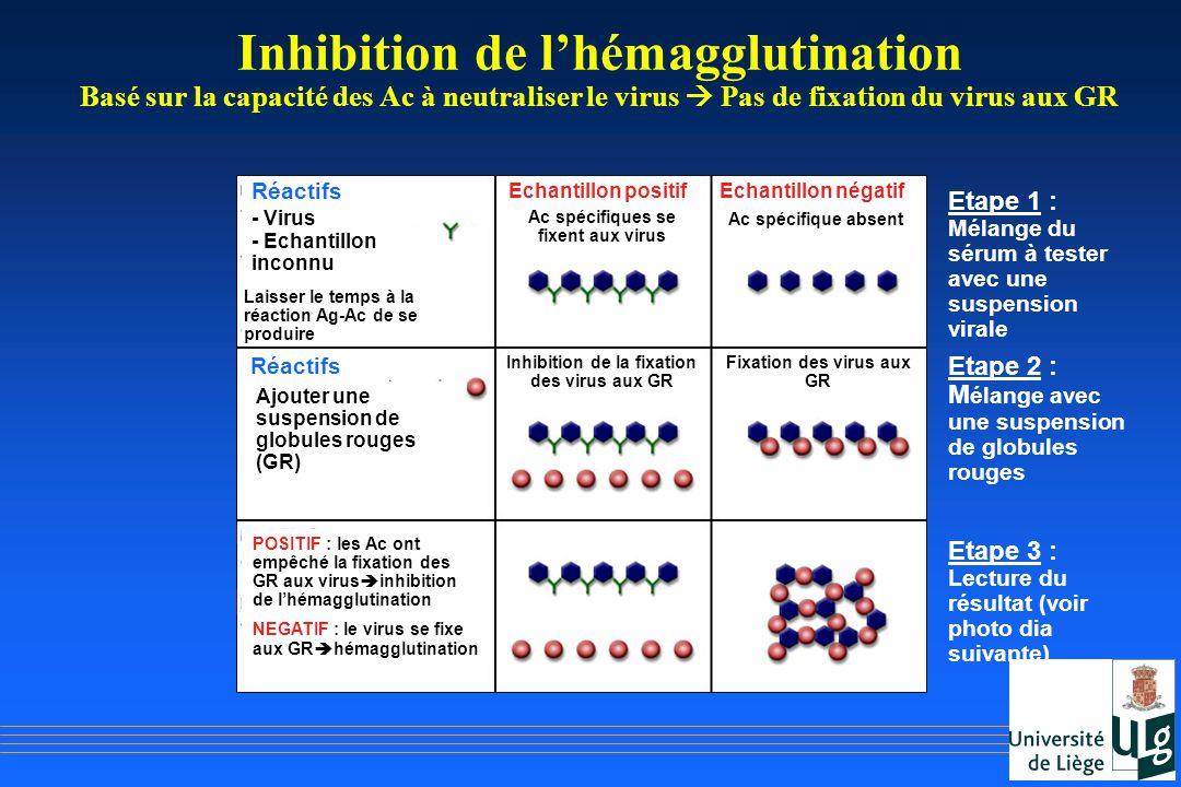 Inhibition de l'hémagglutination Basé sur la capacité des Ac à neutraliser le virus  Pas de fixation du virus aux GR