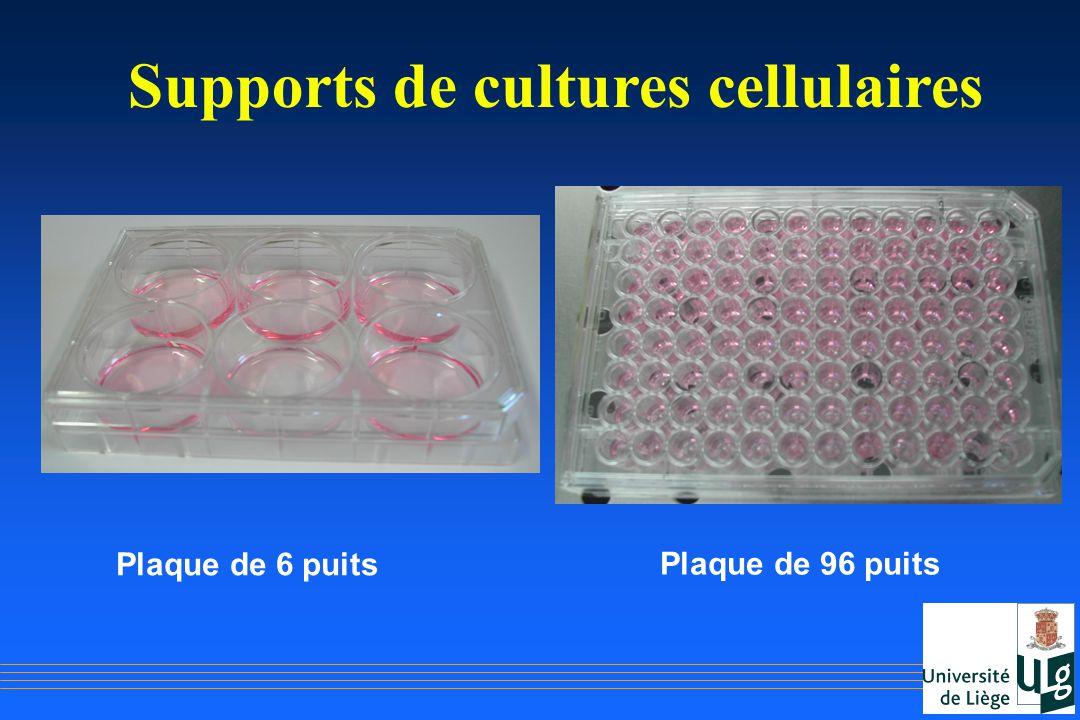 Supports de cultures cellulaires