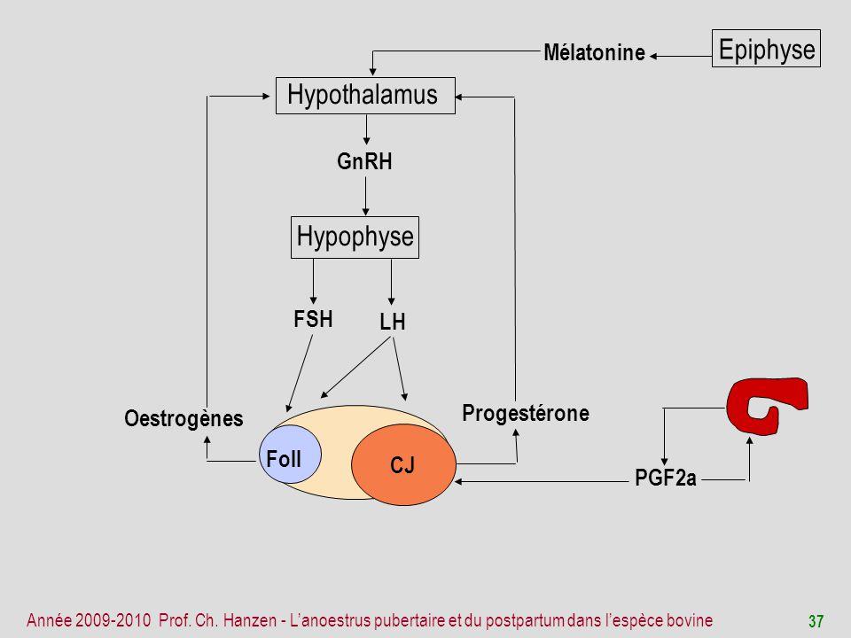 Epiphyse Hypothalamus Hypophyse Mélatonine GnRH FSH LH Progestérone