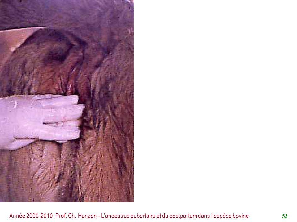 Année 2009-2010 Prof. Ch. Hanzen - L'anoestrus pubertaire et du postpartum dans l'espèce bovine