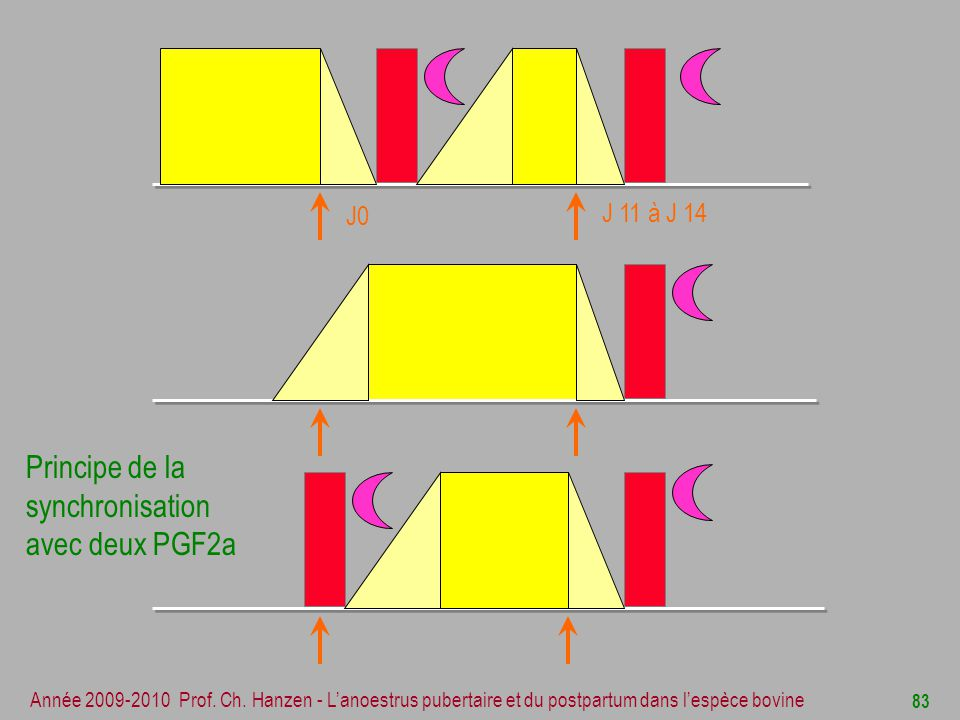 Principe de la synchronisation avec deux PGF2a J0 J 11 à J 14