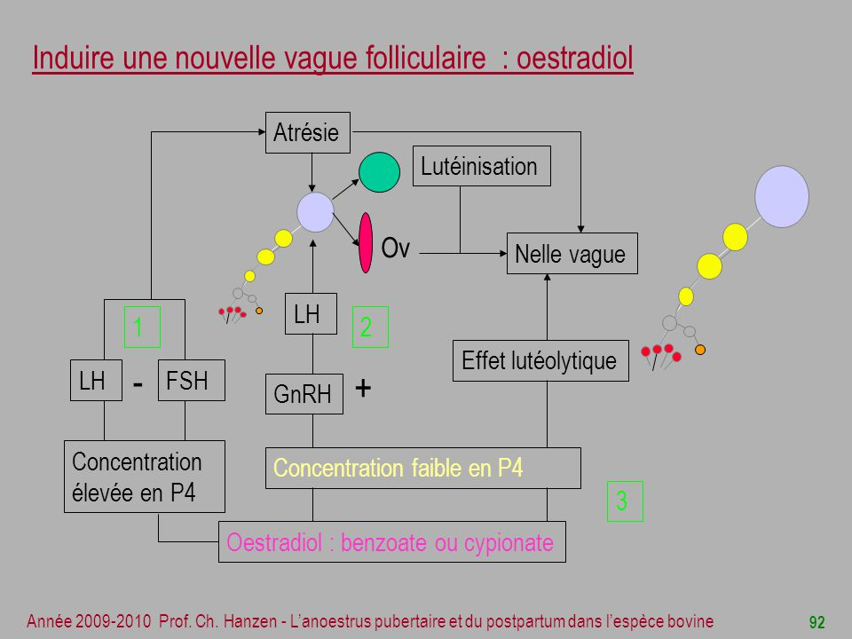 Induire une nouvelle vague folliculaire : oestradiol