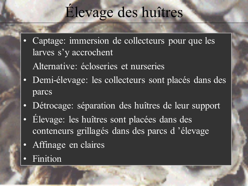 Élevage des huîtres Captage: immersion de collecteurs pour que les larves s'y accrochent. Alternative: écloseries et nurseries.
