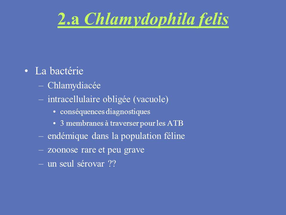 2.a Chlamydophila felis La bactérie Chlamydiacée
