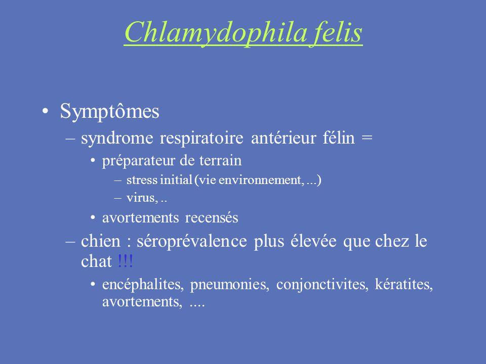 Chlamydophila felis Symptômes syndrome respiratoire antérieur félin =