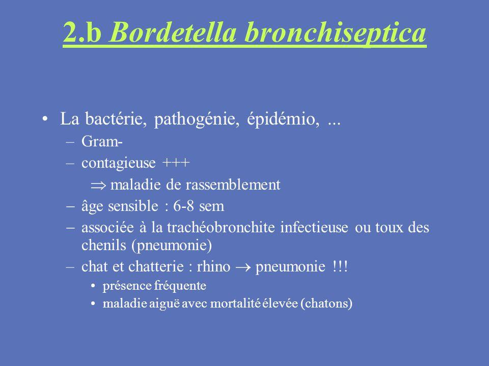 2.b Bordetella bronchiseptica