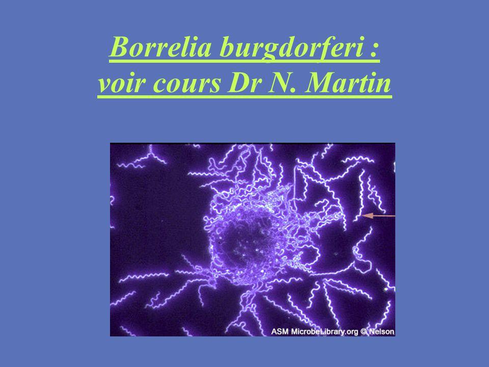 Borrelia burgdorferi : voir cours Dr N. Martin