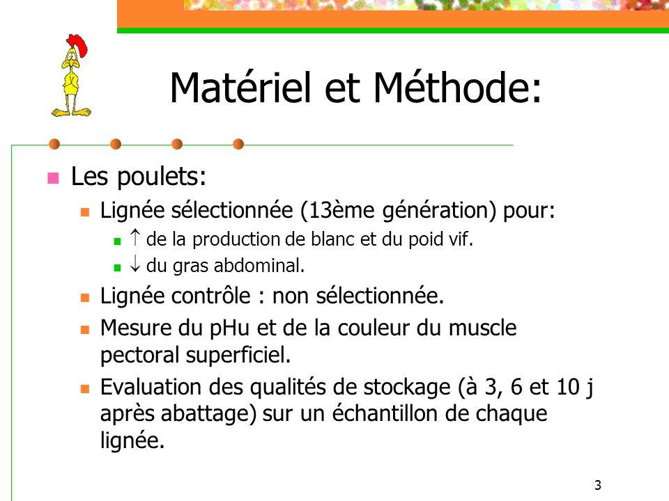 Matériel et Méthode: Les poulets: