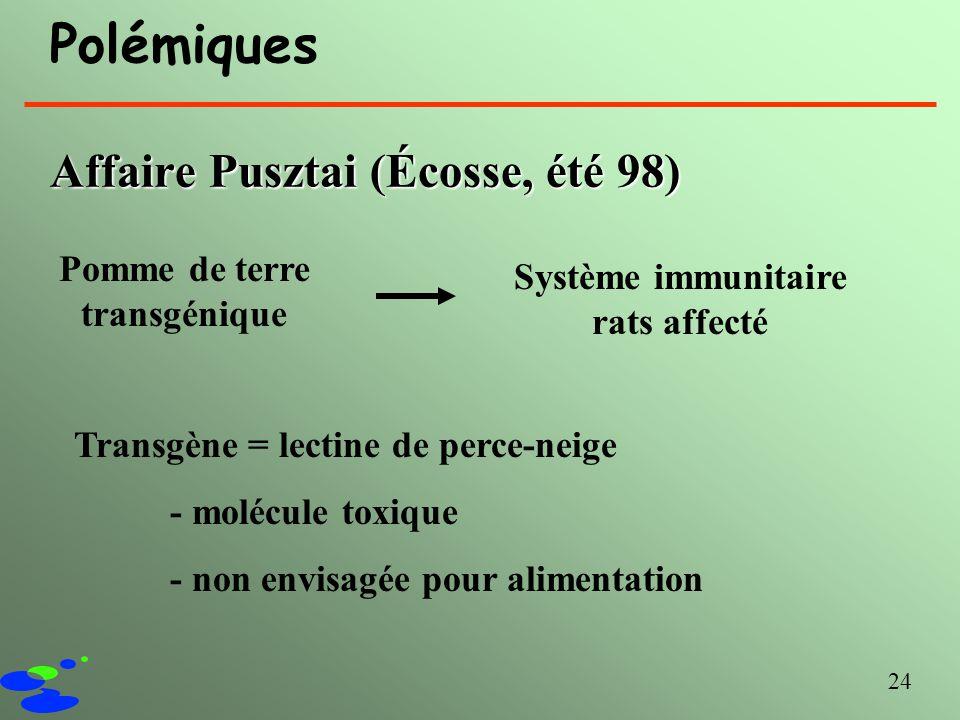 Pomme de terre transgénique Système immunitaire rats affecté