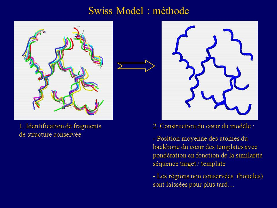 Swiss Model : méthode 1. Identification de fragments de structure conservée. 2. Construction du cœur du modèle :