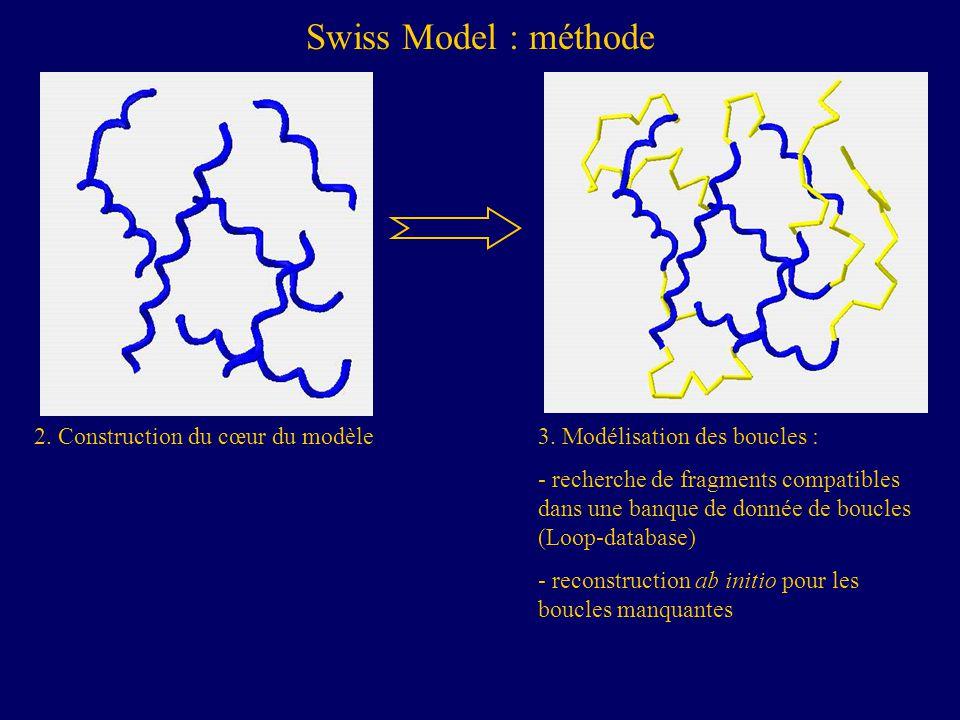 Swiss Model : méthode 2. Construction du cœur du modèle
