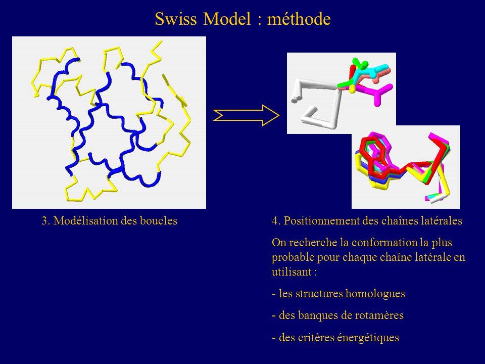 Swiss Model : méthode 3. Modélisation des boucles