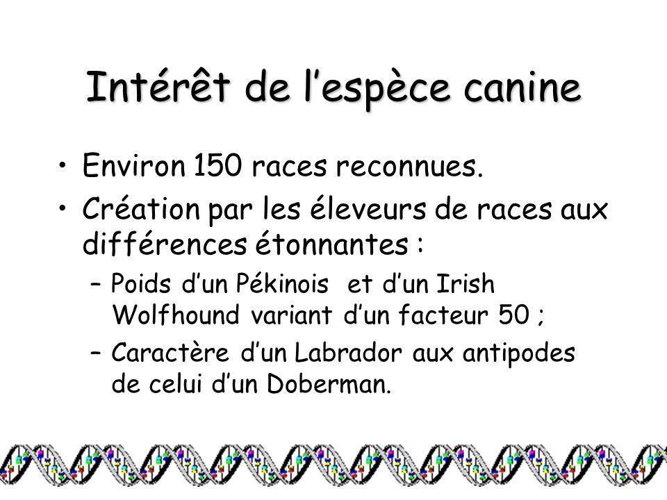 Intérêt de l'espèce canine