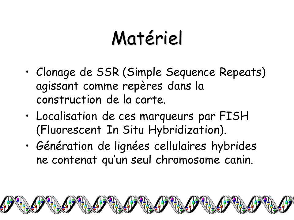 Matériel Clonage de SSR (Simple Sequence Repeats) agissant comme repères dans la construction de la carte.