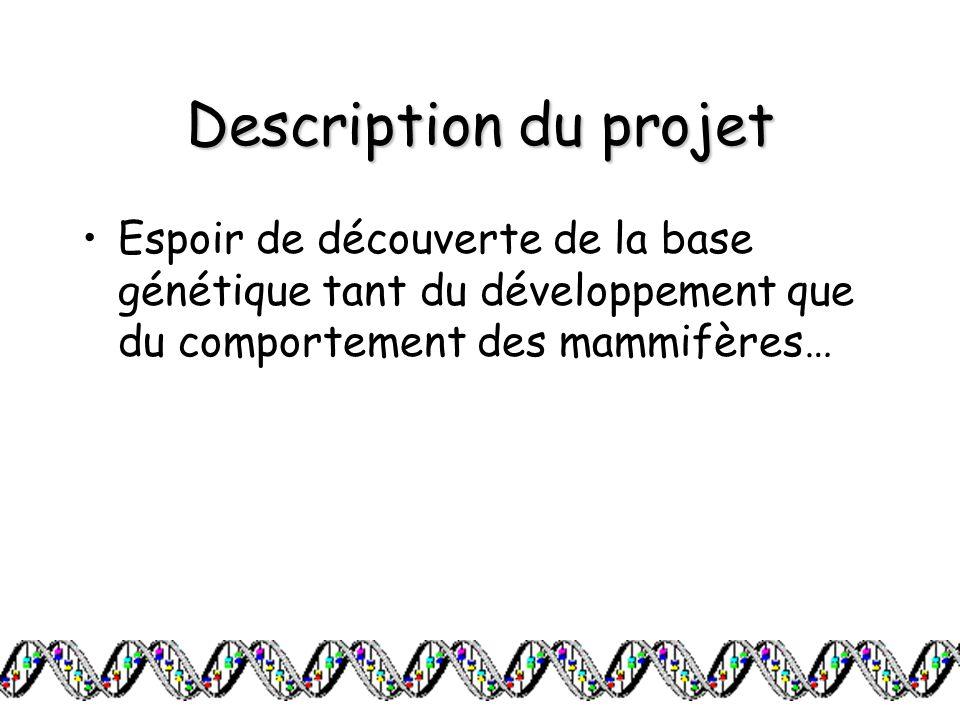 Description du projet Espoir de découverte de la base génétique tant du développement que du comportement des mammifères…