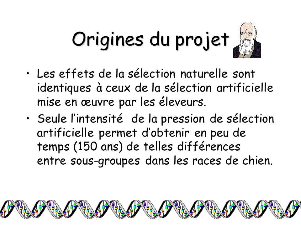 Origines du projet Les effets de la sélection naturelle sont identiques à ceux de la sélection artificielle mise en œuvre par les éleveurs.