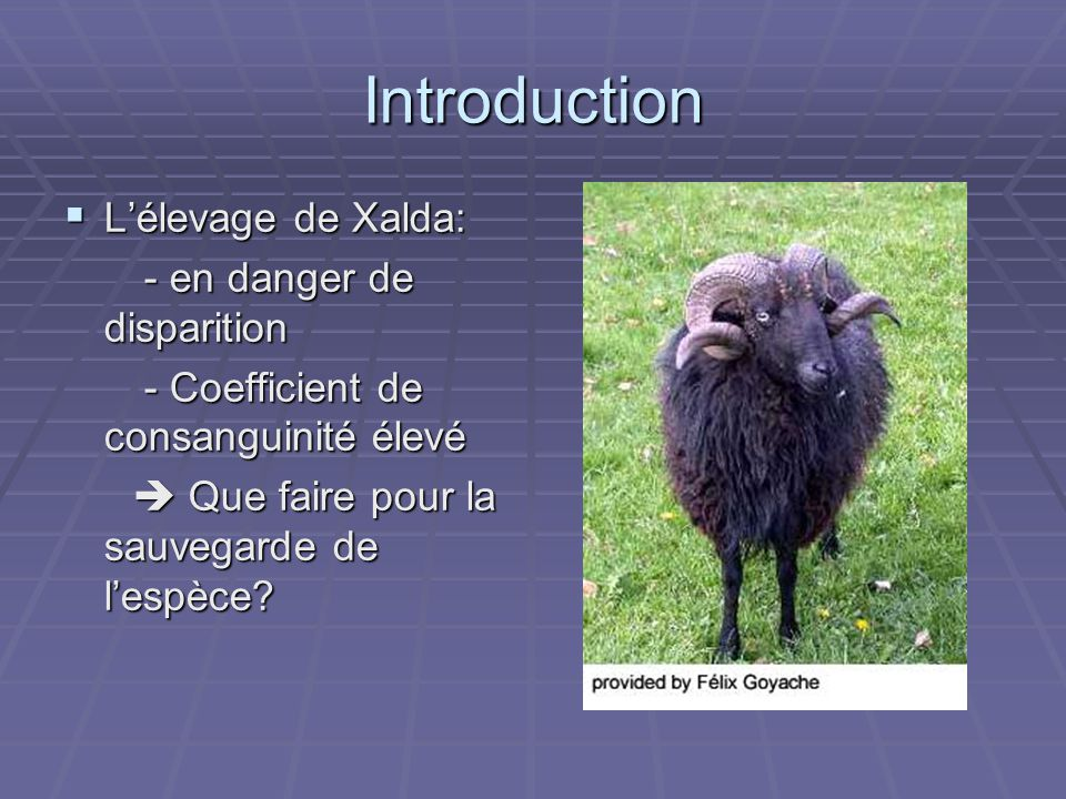 Introduction L'élevage de Xalda: - en danger de disparition